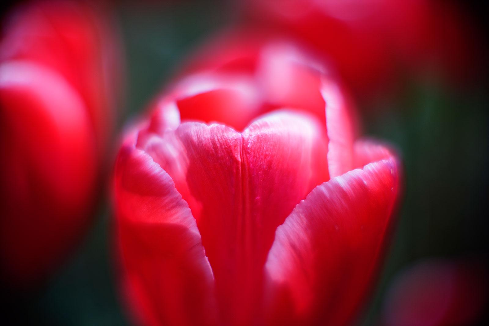 2016_04_Floralia_20160419_141403_DxO_v10