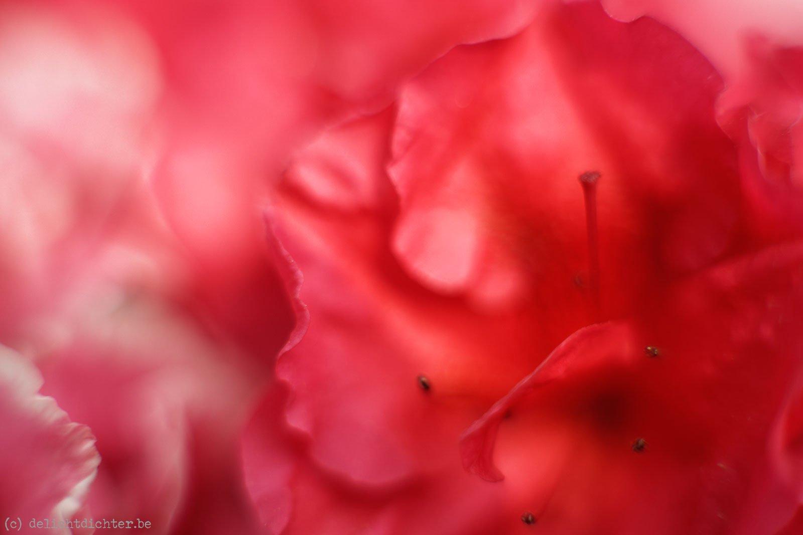 2011_04_koninklijkeserres_20110424_103951_dxo