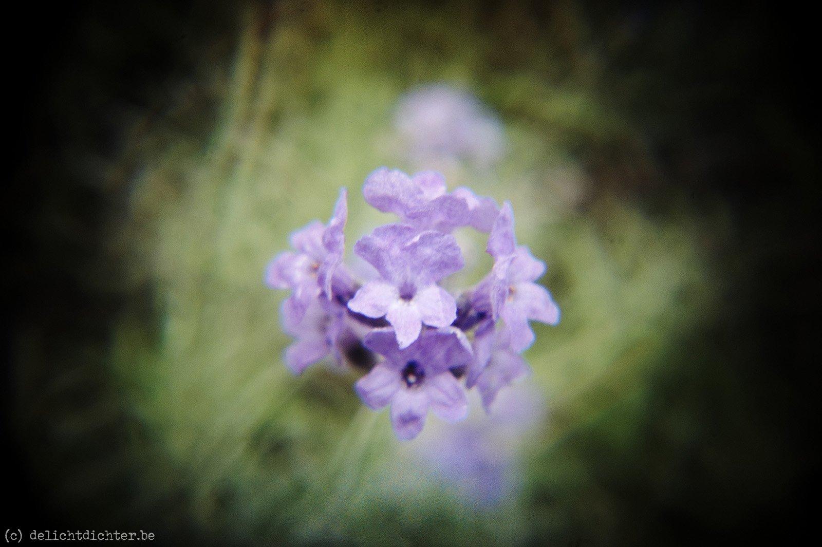 2011_06_Holga_20110626_075724_dxo
