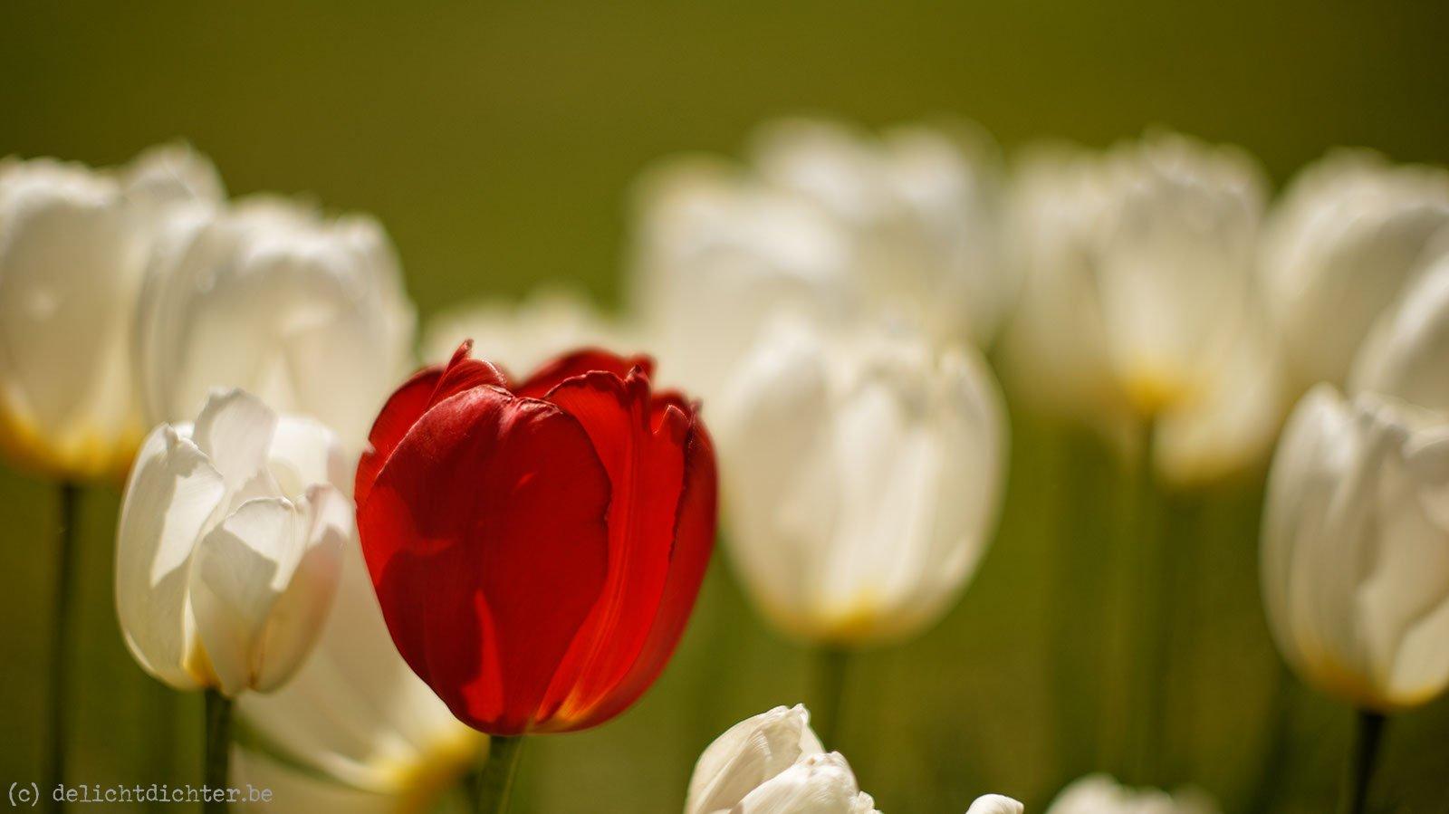 2014_04_Floralia_20140421_115435_DxO_v9