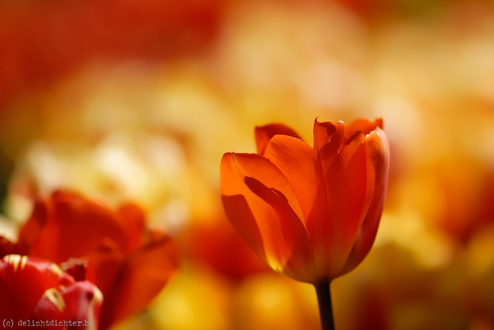 2014_04_Floralia_20140421_120839_DxO_v9