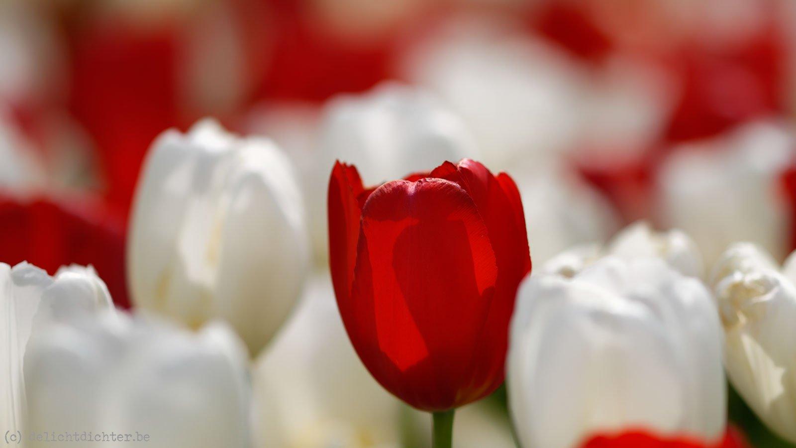 2014_04_Floralia_20140421_122234_DxO_v9