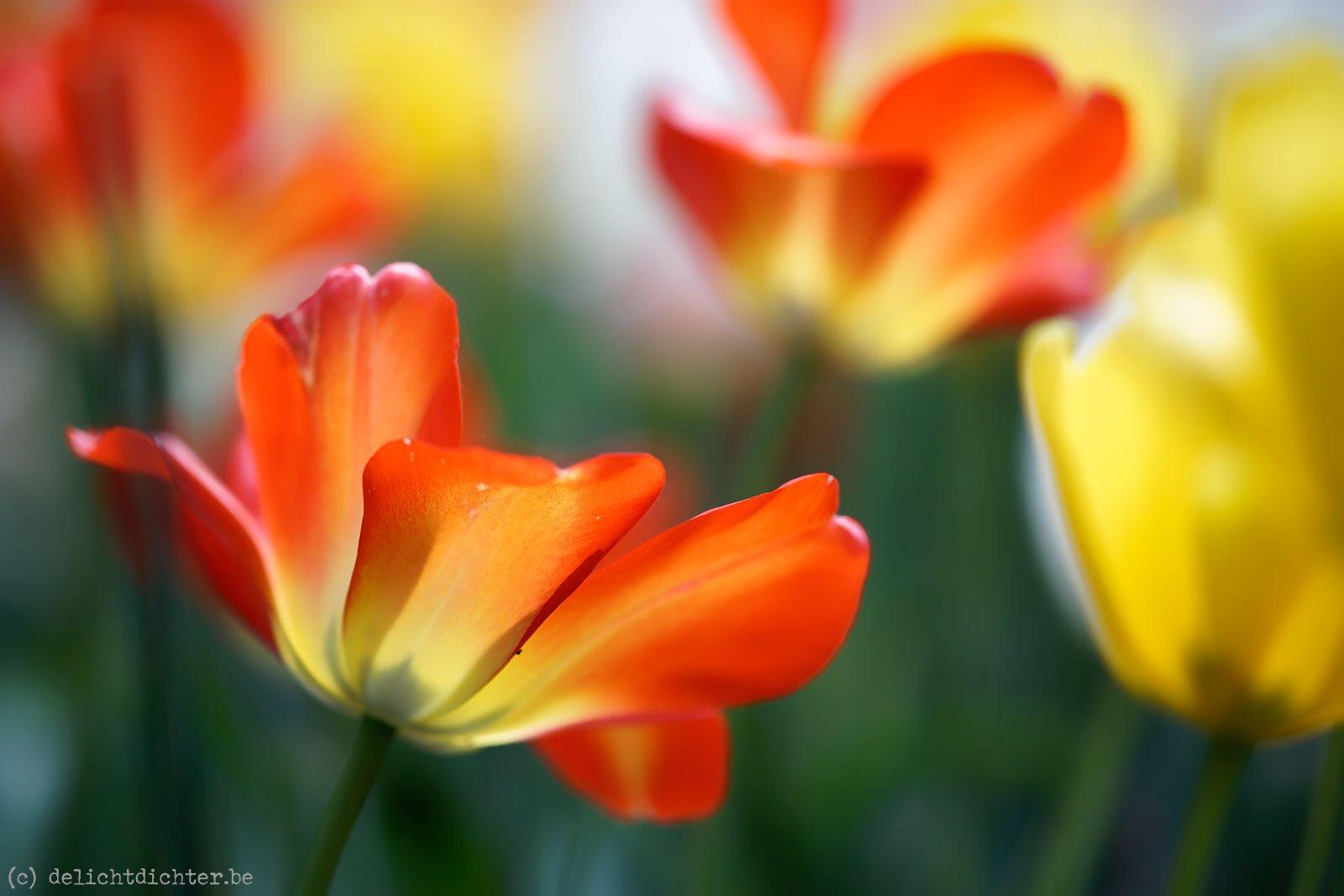 2014_04_Floralia_20140421_125843_DxO_v9
