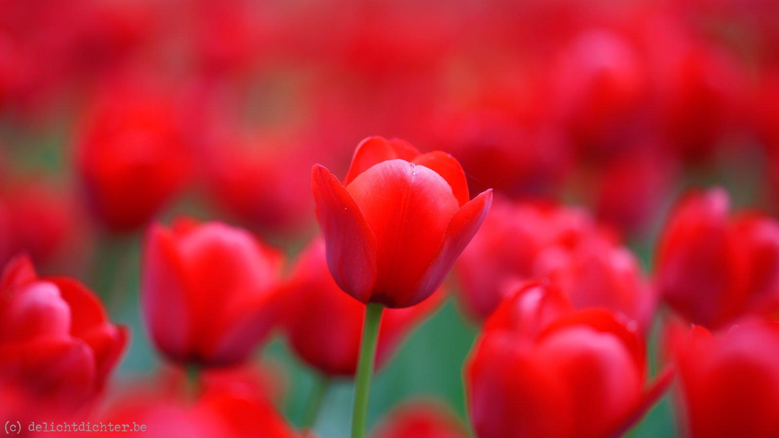 2014_04_Floralia_20140421_130049_DxO_v9_2