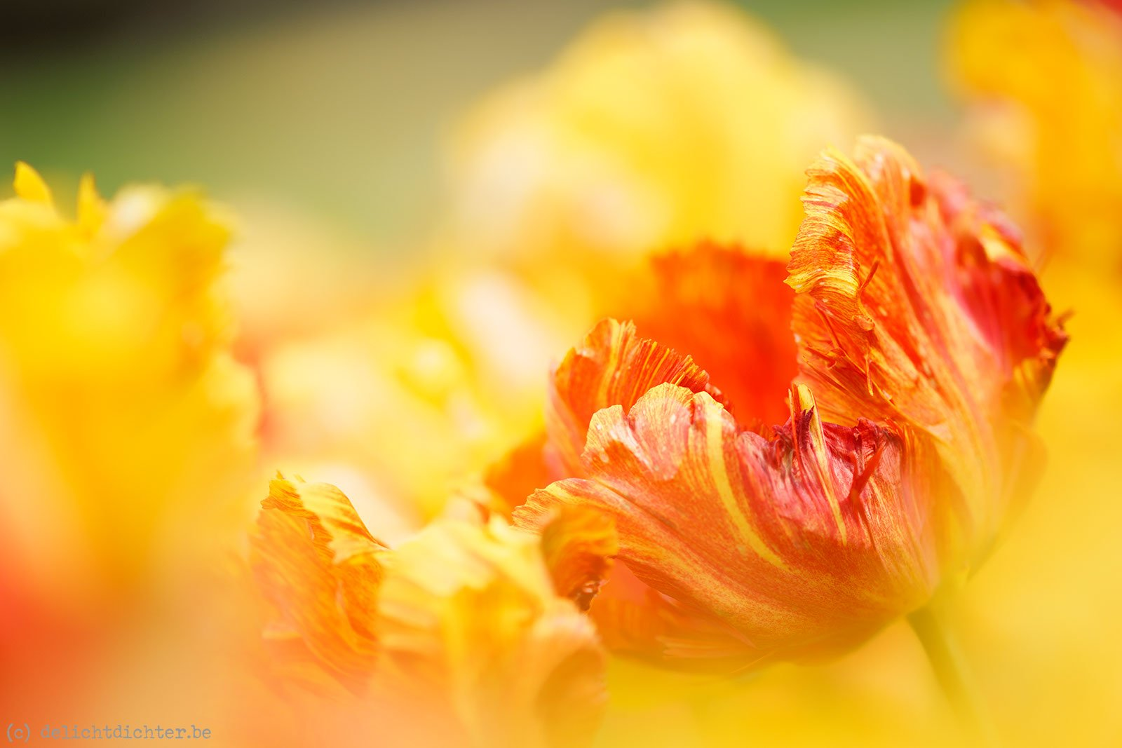 2014_04_Floralia_20140421_130301_DxO_v9