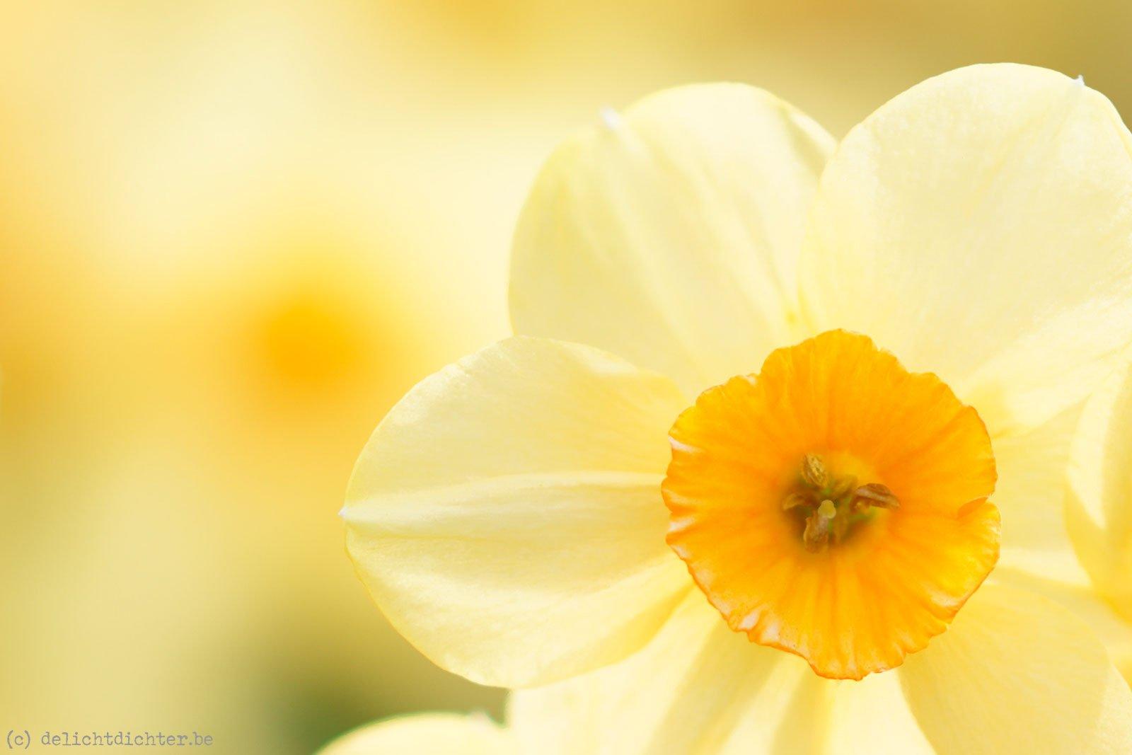 2014_04_Floralia_20140421_130535_DxO_v9