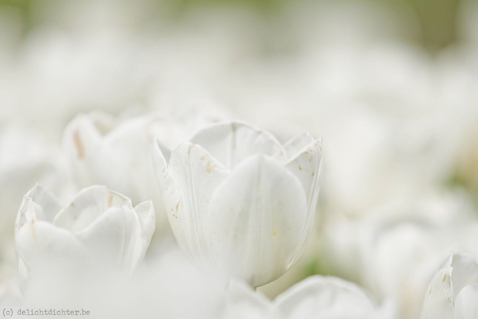 2014_04_Floralia_20140421_131043_DxO_v9