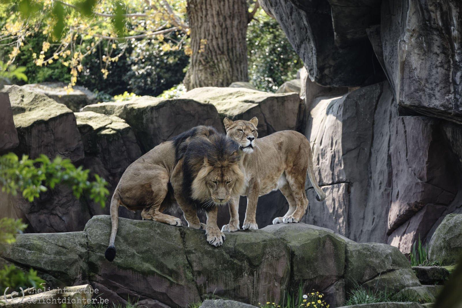 2019_04_Zoo_20190407_140236a_DxO_PL2_1600px