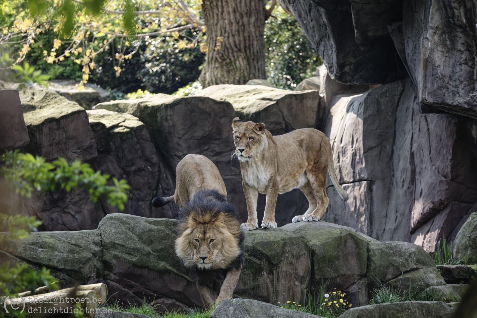 2019_04_Zoo_20190407_140237_DxO_PL2_1600px