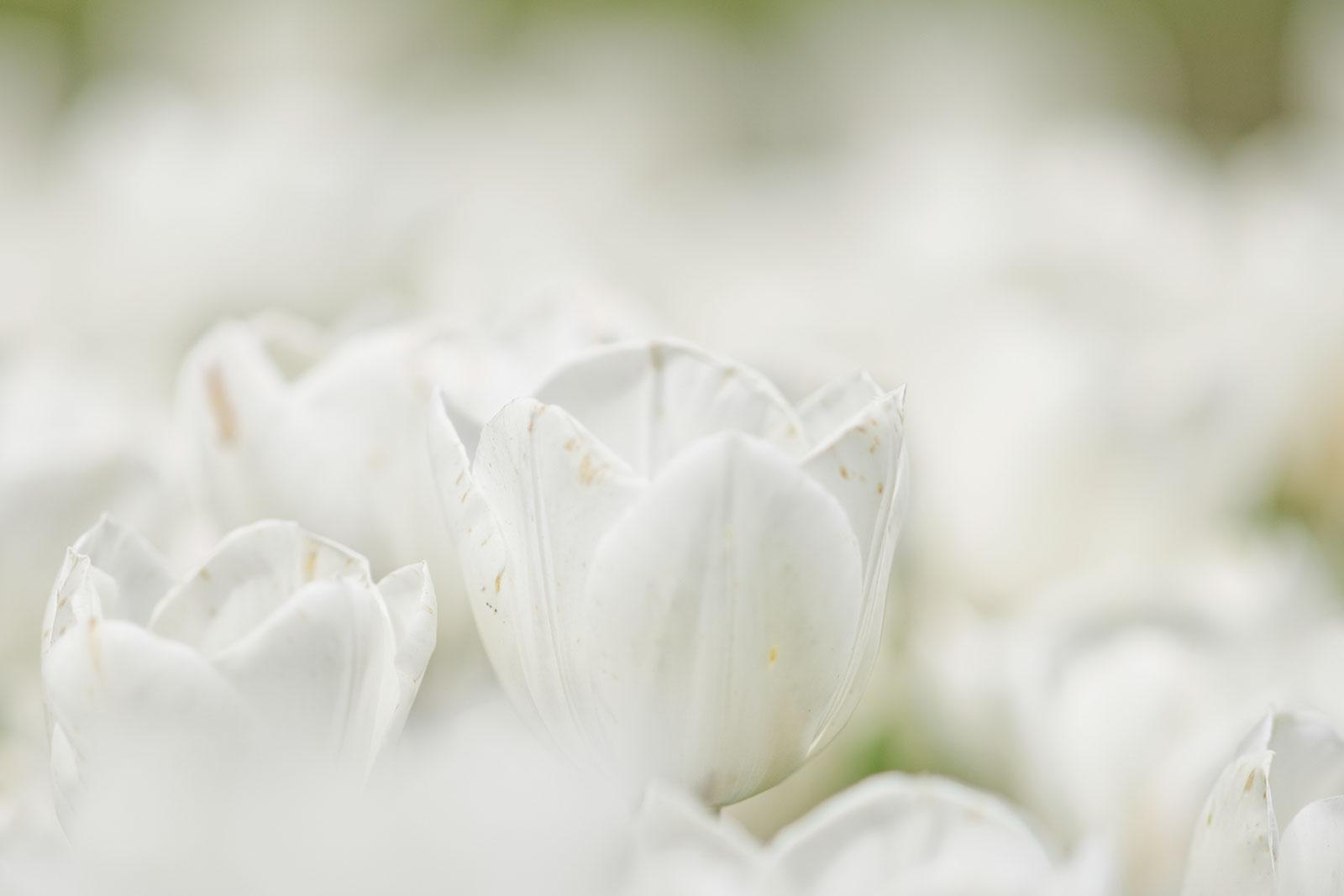 Floralia Brussel, april 2014