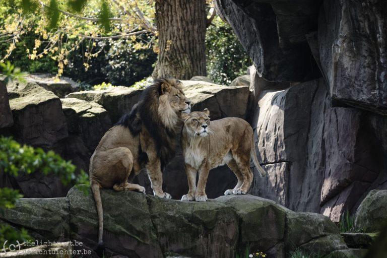 Koning der dieren, april 2019